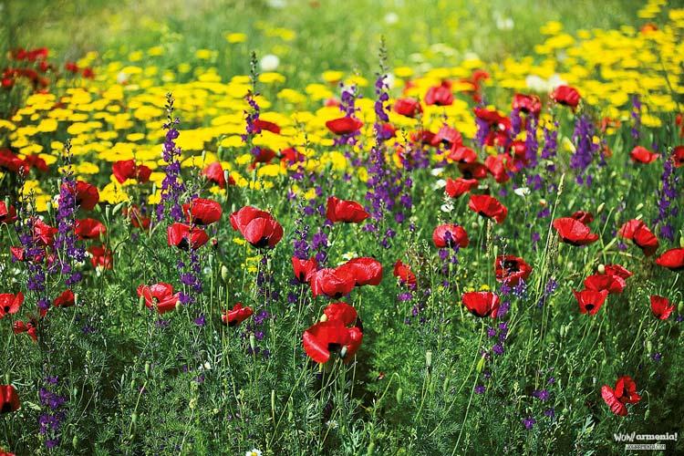 بهار ارمنستان